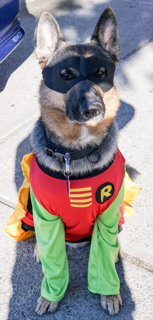 Jax as Robin