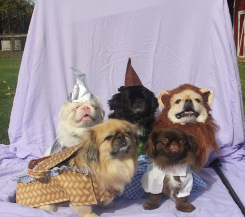 Wizard of Oz Pets
