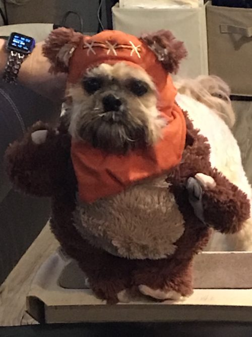 Jackson as Star Wars Ewok