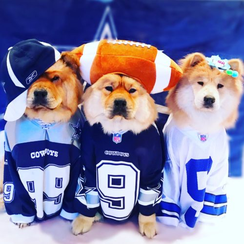 Cowboys Fanatics!
