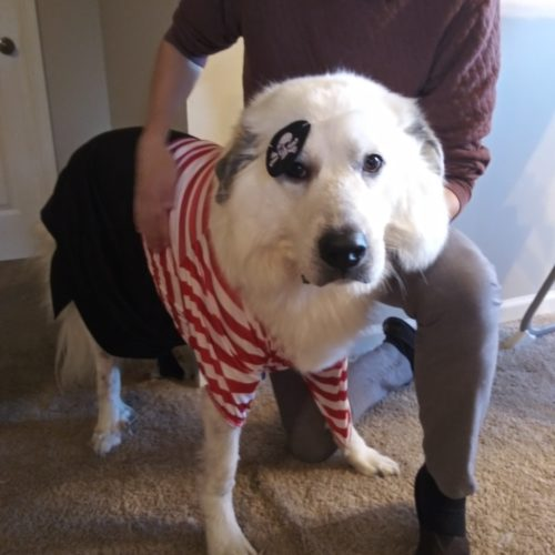 Pirate Pup