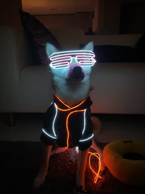 Light Balance Dog