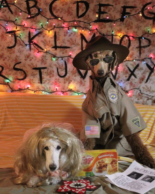 Stranger Poodles: Eleven and Sheriff Hopper