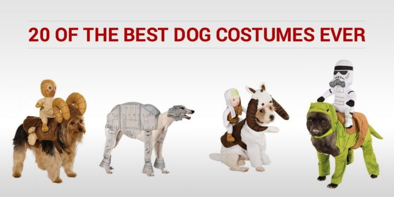 20 of the Best Dog Costumes Ever