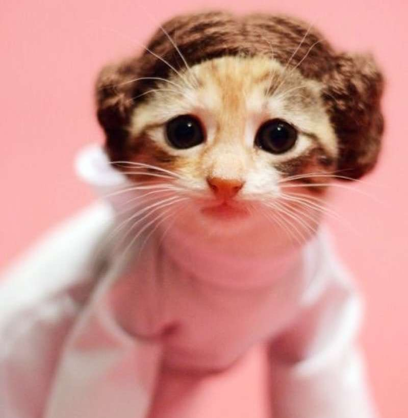 Princess Leia Cat-gana