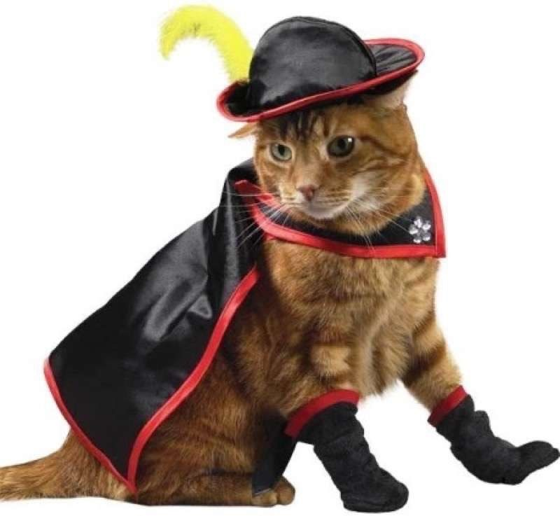 cute-cat-costumes-04