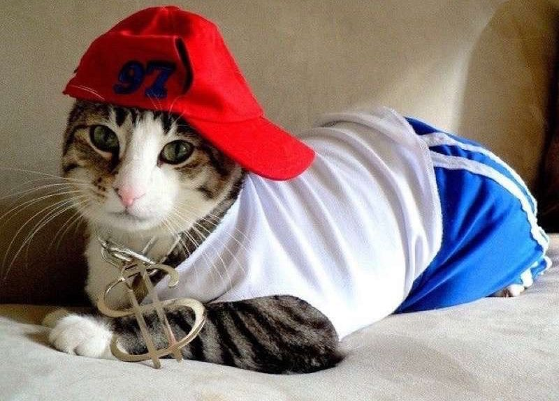 cute-cat-costumes-05