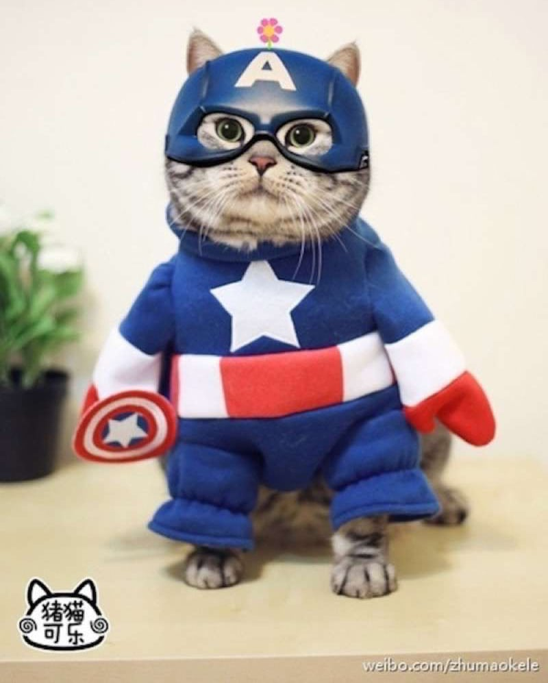 cute-cat-costumes-09