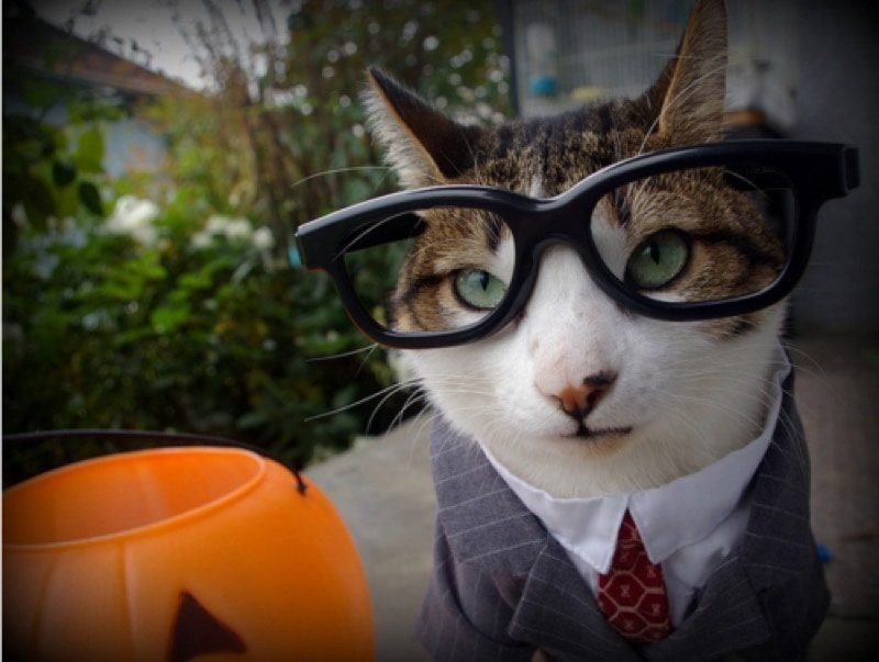 cute-cat-costumes-10
