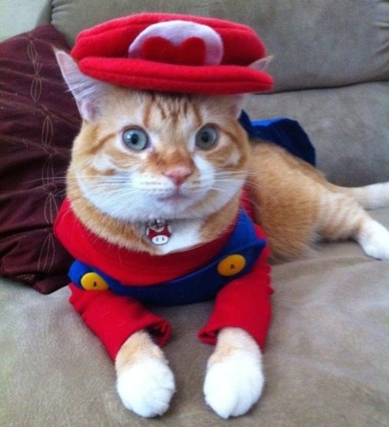 cute-cat-costumes-12