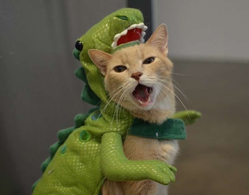 cute-cat-costumes-13 & 30 Cat Costumes That Are Too Cute | Costume Wall