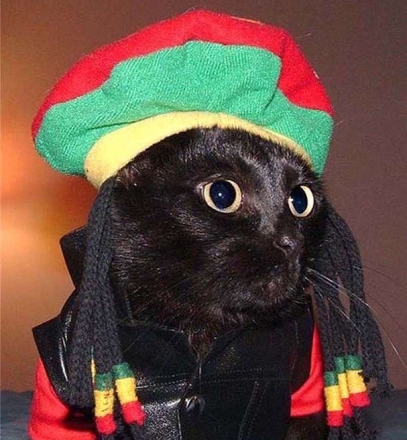 cute-cat-costumes-14 & 30 Cat Costumes That Are Too Cute | Costume Wall
