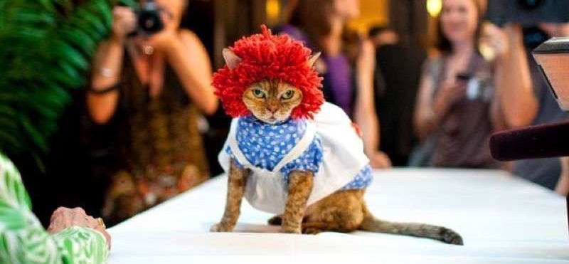 cute-cat-costumes-15