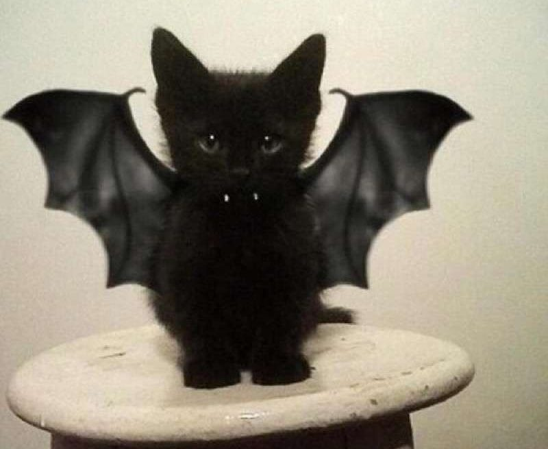 cute-cat-costumes-18