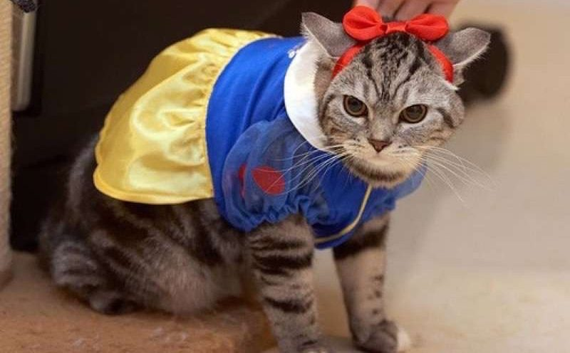 cute-cat-costumes-23