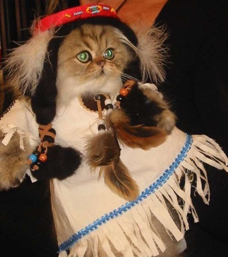 cute-cat-costumes-25