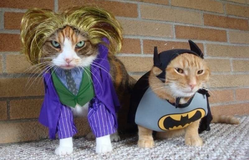 cute-cat-costumes-26
