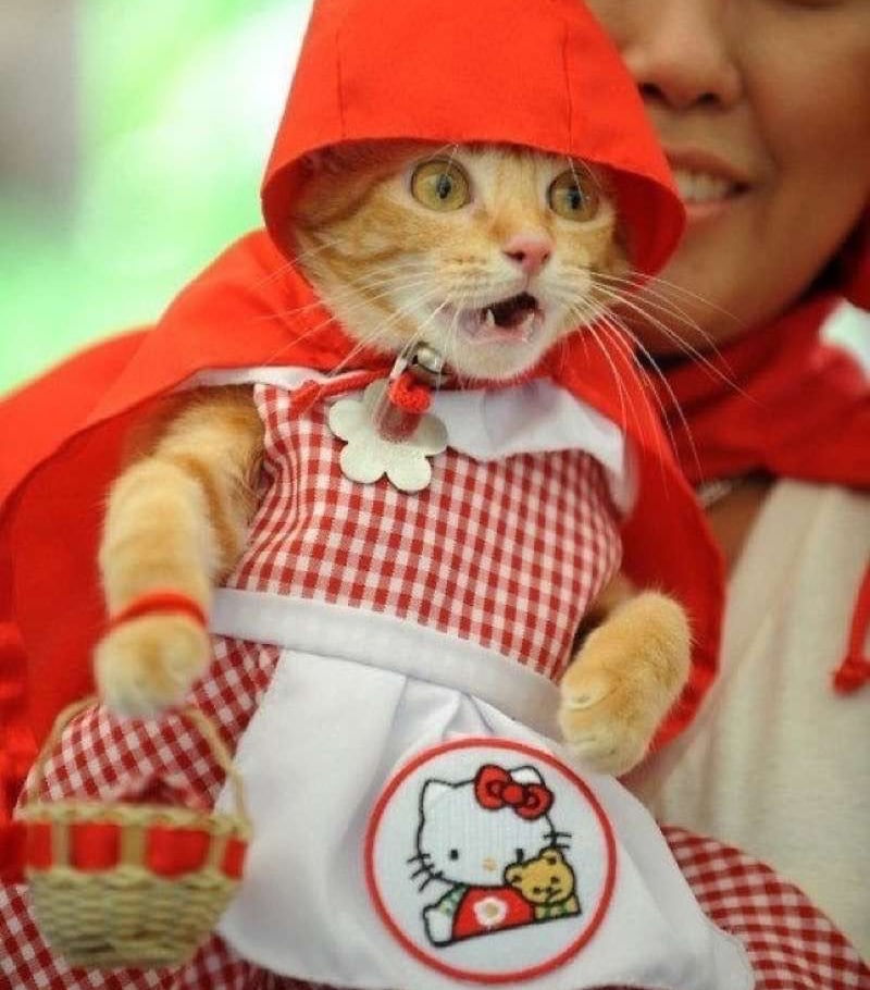 cute-cat-costumes-28