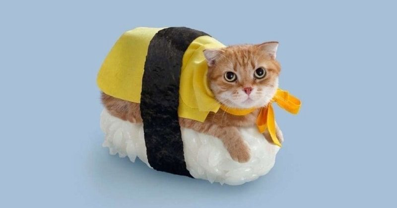 cute-cat-costumes-30