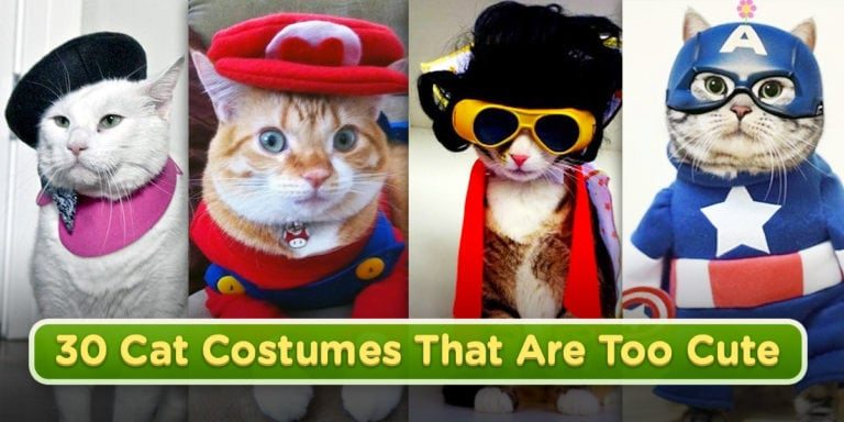 30 Cat Costumes That Are Too Cute