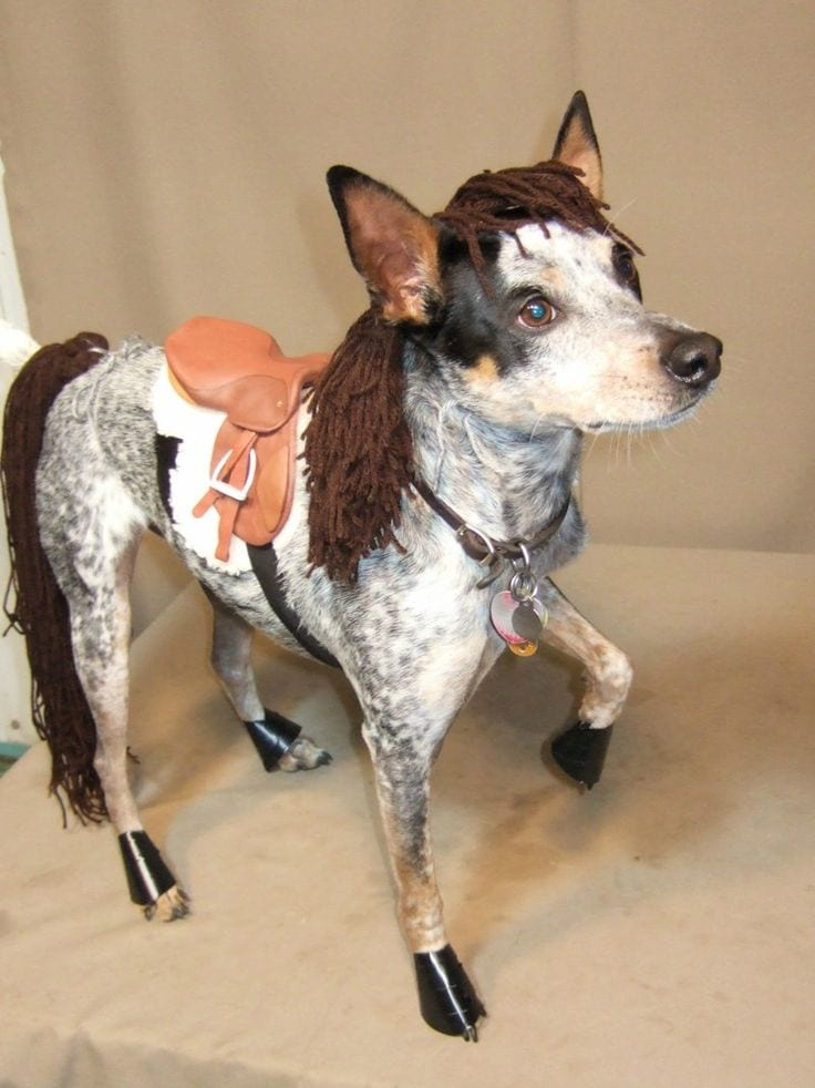 Horse Dog & 20 of the Best Dog Costumes Ever | Costume Wall