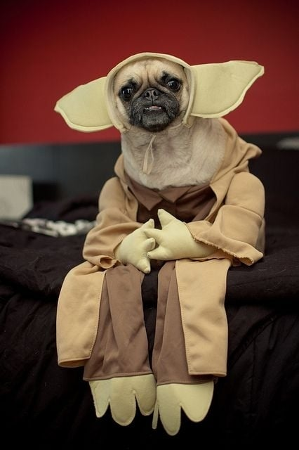 Yoda Dog & 20 of the Best Dog Costumes Ever | Costume Wall
